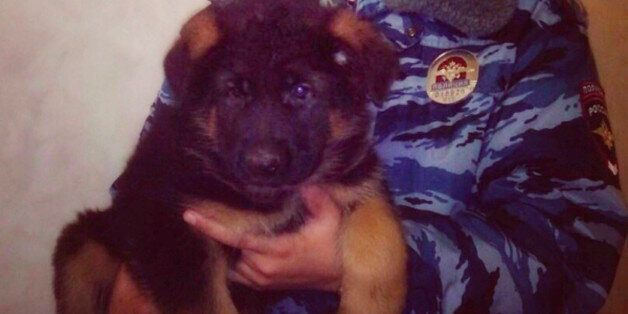 In this undated photo provided by the Russian Interior Ministry, a Russian police officer holds a puppy,...