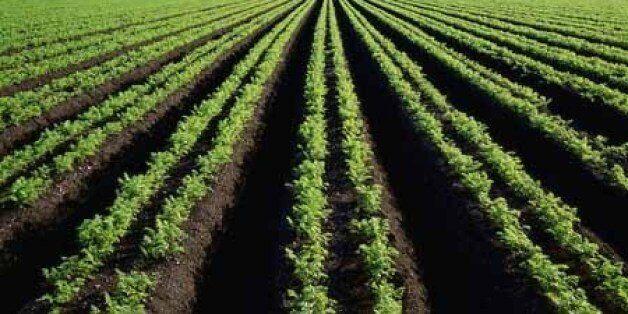 L'Algérie perd chaque année une superficie agricole utile de 300.000
