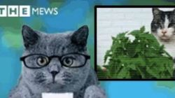 Médias belges: autocensures et....chatons