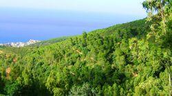 Un programme pour réinvestir les forêts