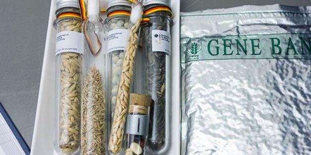Des réserves de graines