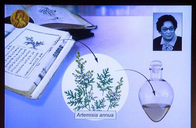 Prix Nobel : la médecine chinoise traditionnelle récompensée dans les travaux de Tu Youyou sur le