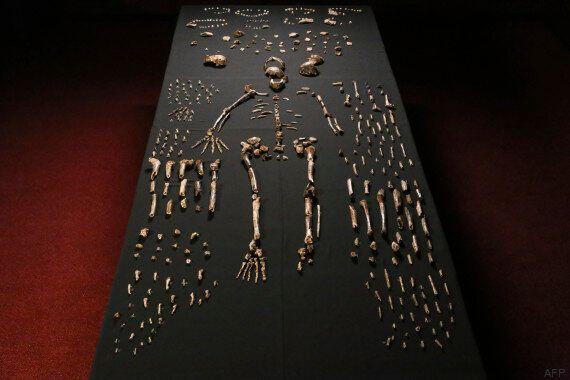 Homo naledi, une ancienne espèce inconnue du genre humain découverte en Afrique du