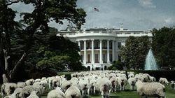 Un mouton près de la Cour suprême des