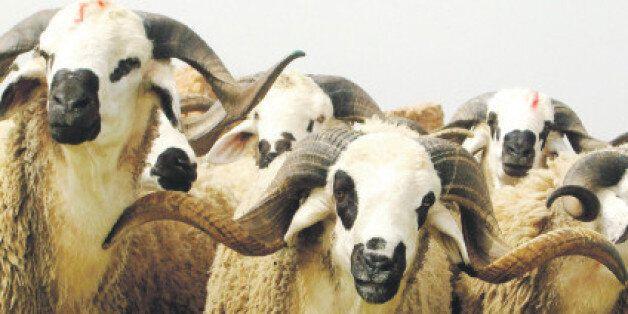 Aid al Adha: Les moutons se vendent aussi sur