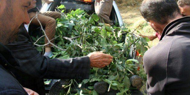 Des villageois recouvrent de branchages le corps d'un soldat tué dans une attaque le 7 septembre 2015...