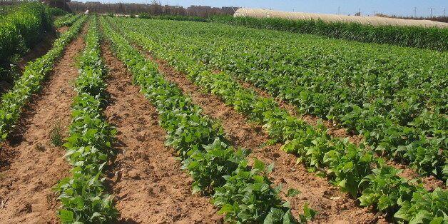 Agriculture: 3 millions d'hectares de terres cultivables sont