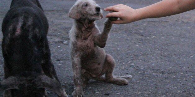 Tunisie: L'abattage des chiens