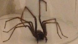 Vous avez peur des araignées? Cliquez à vos risques et