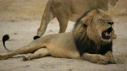Zimbabwe: un Américain fait scandale en tuant le lion préféré des