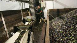 L'huile d'olive tunisienne s'exporte