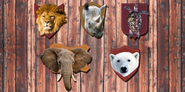Ces animaux en danger qui sont toujours