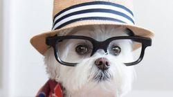 Ces chiens ont un style de