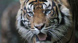 La sixième grande extinction animale serait