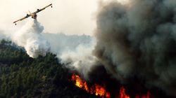 Tétouan: Un incendie a ravagé près de 50 hectares de