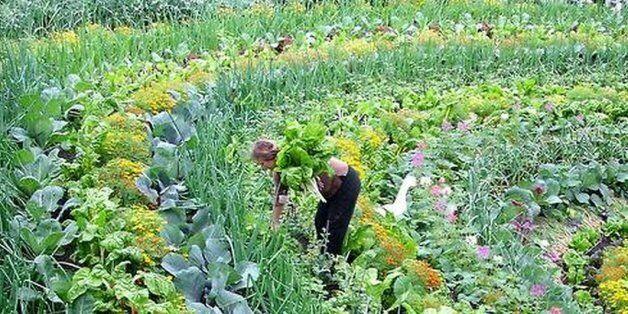 Incroyables Comestibles, le projet qui transforme les villes en immenses potagers communautaires, débarque...