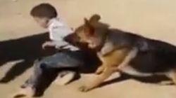 Enfant martyrisé par un chien: les auteurs arrêtés à