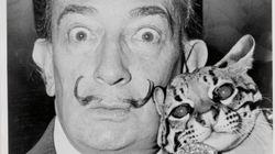 Quelle était la relation de Picasso, Matisse, Dali avec leur