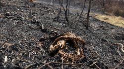 In Bolivia oltre 2 milioni di animali selvatici sono morti per gli incendi delle