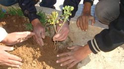 Nass El Kheir et El Wafa lancent la plantation des 10 000 arbres en