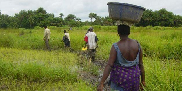 Autosuffisance alimentaire en Afrique: Deux erreurs à