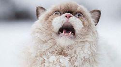Ce chat a bien fait rire les internautes