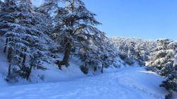 Le nord et l'est de l'Algérie sous la neige (PHOTOS,
