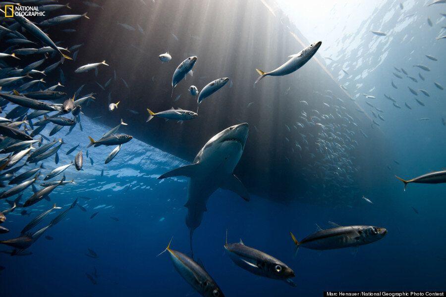 10 photos du concours National Geographic à couper le