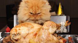 Rencontrez Garfi, le chat le plus fâché du