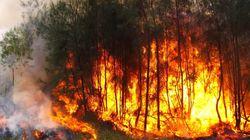 Huit fois plus de surfaces incendiées cet été à
