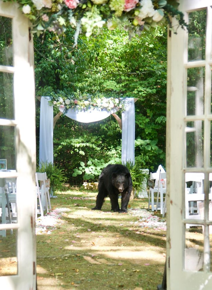 Bear walks down the aisle at Tennessee wedding.