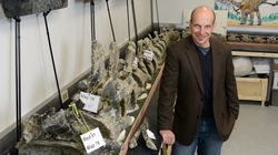 Un gigantesque dinosaure découvert en Argentine