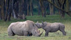 La sixième extinction massive des espèces aurait
