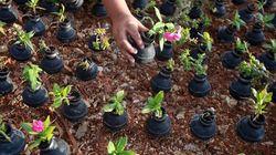 Palestine: On plante des fleurs dans les