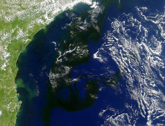 Brésil: avec la chaleur, une masse d'algues de 800 km s'est formée sur le littoral