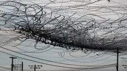 Et si les oiseaux laissaient des traces dans le ciel comme les avions