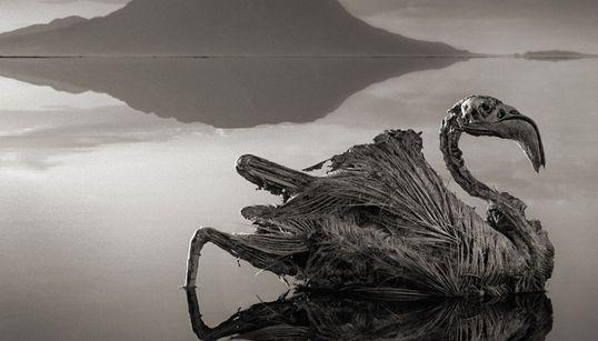 Ne vous baignez jamais dans ce lac qui change les animaux en