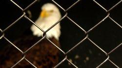 Weld el 15, Amina, Jabeur Mejri: La liberté d'expression en
