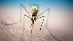 4 cas de paludisme répertoriés en banlieue de