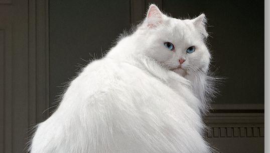 Comment photographier un chat, ce pro le savait mieux que