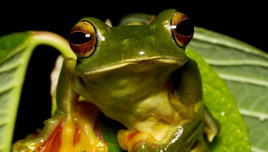 How Frogs On Instagram Are Spurring An Unprecedented Collective Documenting Of