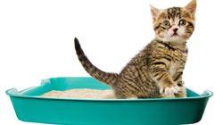Cómo elegir la arena de gato que más te conviene a ti y a tu