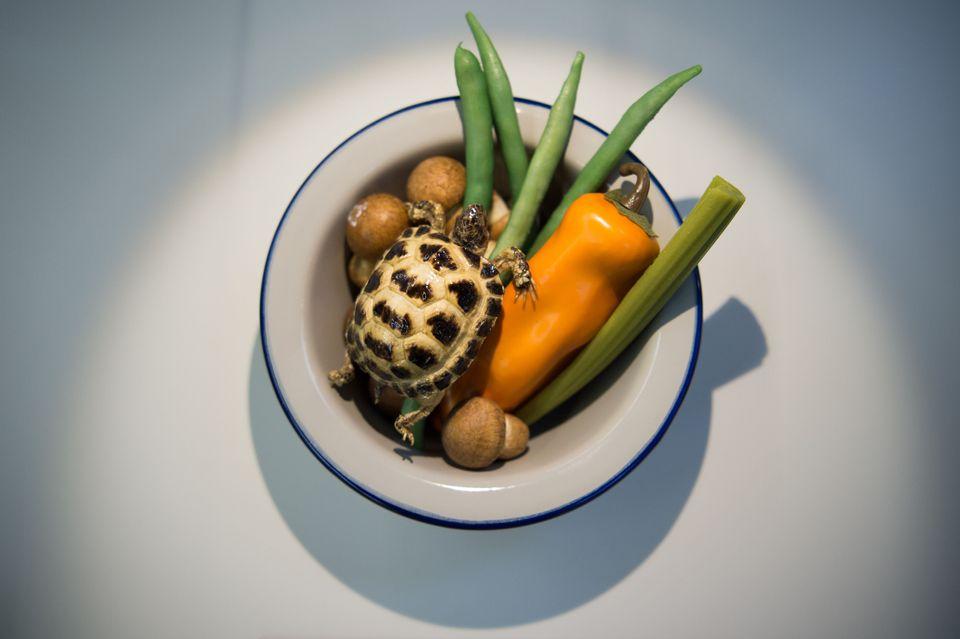 Συστατικά για σούπα χελώνας από την Κίνα.