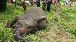Σρι Λάνκα: Επτά νεκροί ελέφαντες, πιθανώς από