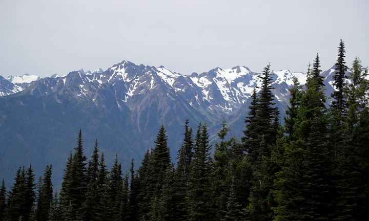 In this photo taken Tuesday, July 9, 2019, the Olympic Mountains are seen beyond a forest from Hurricane Ridge in the Olympic