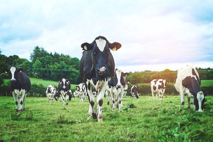 Environnement, conditions d'élevage, sont aussi des critères à prendre en compte.
