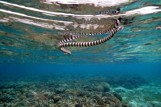Πήγε για ψάρεμα, τον δάγκωσε θαλάσσιο φίδι και πέθανε προτού το