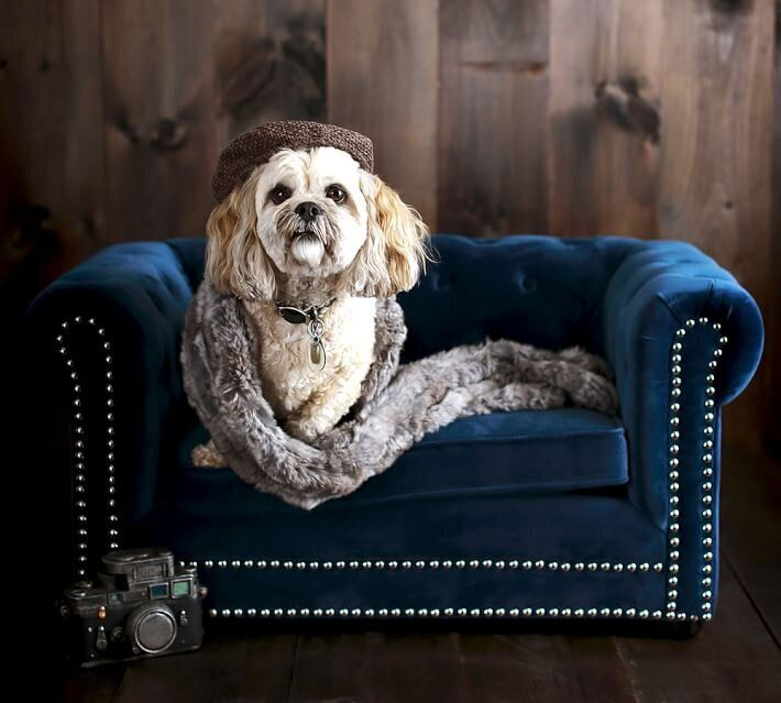"Pottery Barn's ""Chesterfield Pet Bed,"" which retails for about $330, has a wood frame, velvet cushions, and a button-tufted back with nailhead trim."