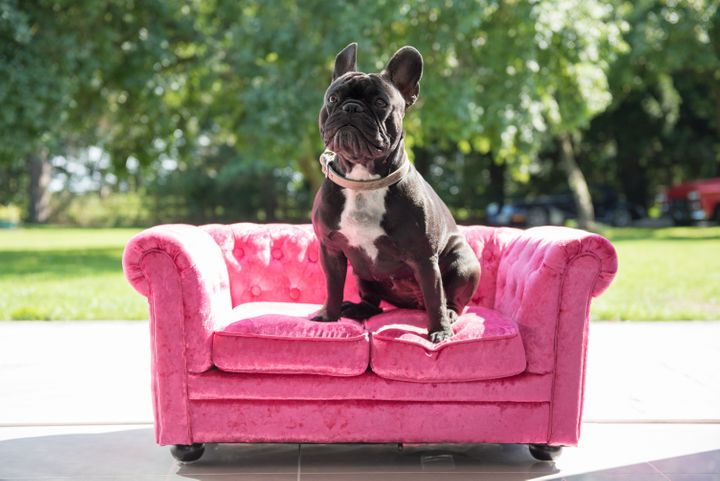 High-quality, aesthetically pleasing furniture for animals is an increasingly common trend.