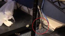 Topo cade dal soffitto alla Casa Bianca e atterra sul pc di un corrispondente